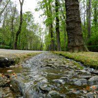 Camino a La Alhambra – Mª Teresa Ramírez