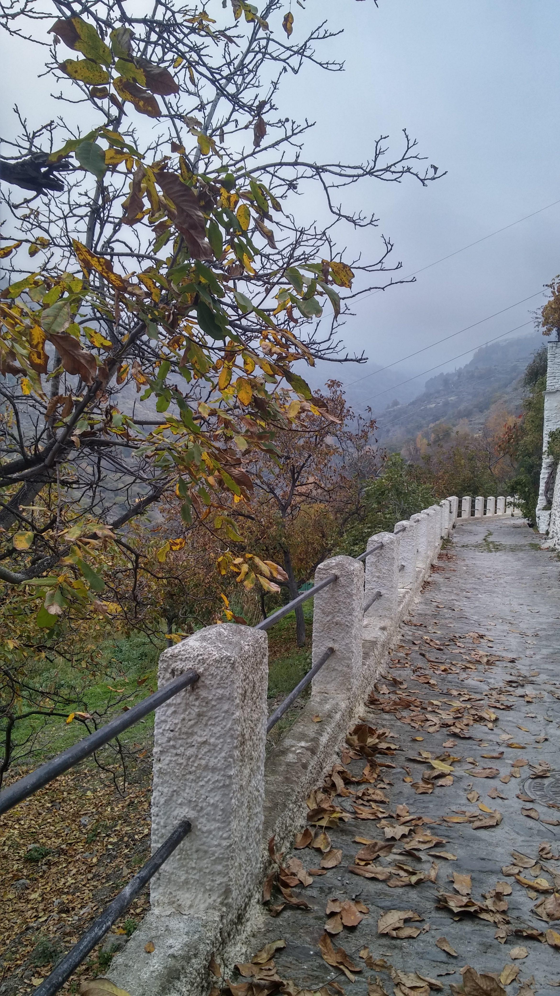 Colores de otoño en la Alpujarra (Campaneira) – María del Mar Ortiz Martínez (España)