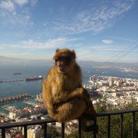 El mono encima del mundo – Trenice Lane (EEUU)