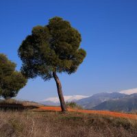 Encima de la Alhambra – Robert Mechler