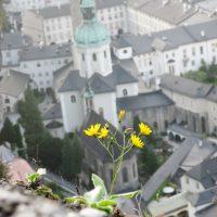 Flores en Salzburgo – Montana Mosby (EEUU)
