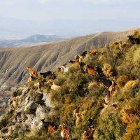 Las cabras de Monachil – Riccardo Fanari