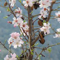 Primavera en Sacromont- Janae Hannemann