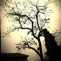 arbol – Malak Nofal