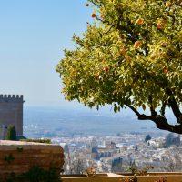 Alhambra Naranjo